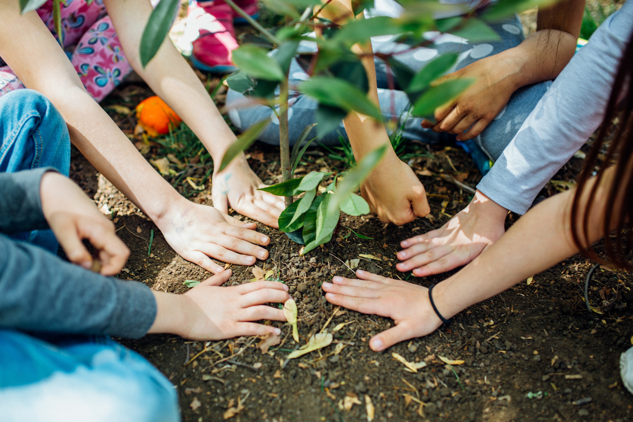 How to Celebrate Earth Day at Home