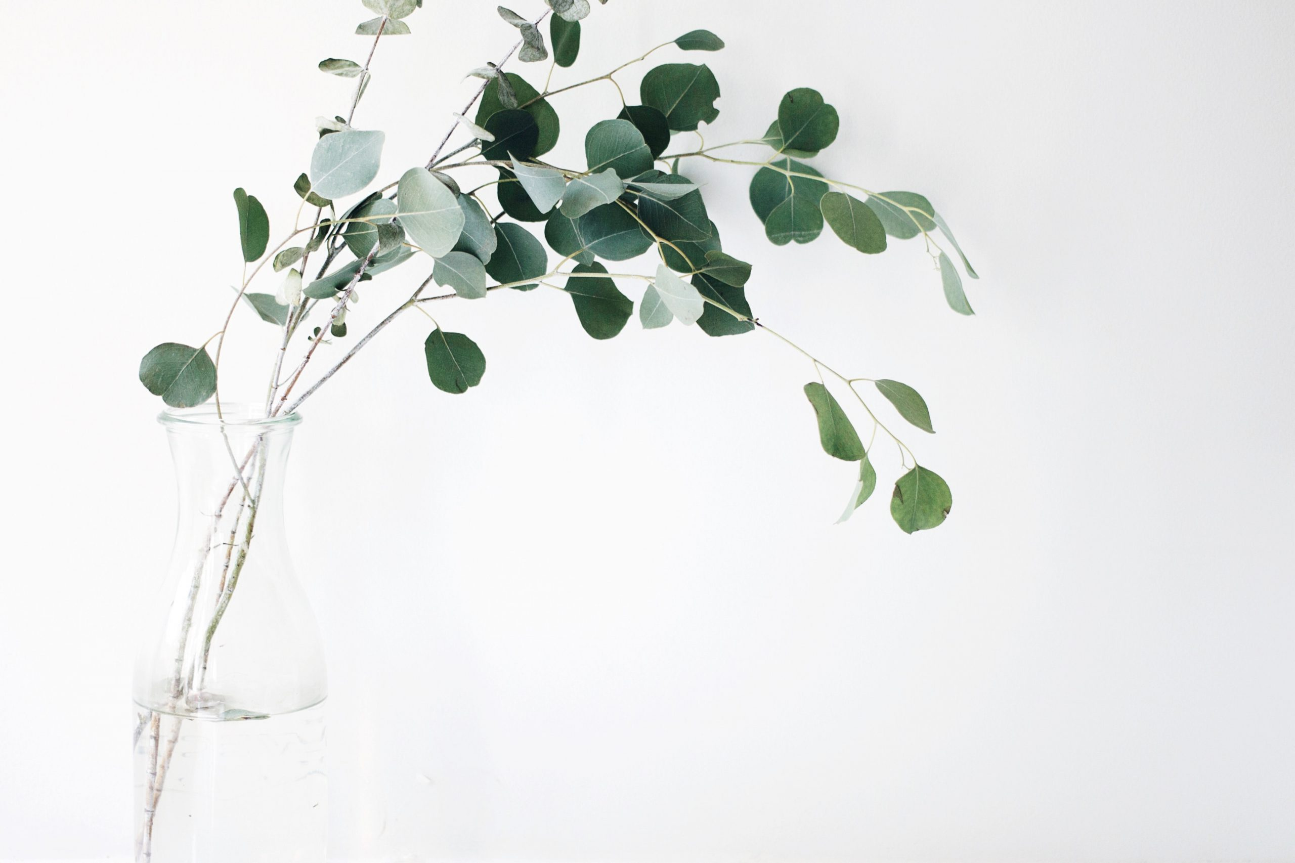 Top 10 Greenery and Foliage for Floral Arrangements