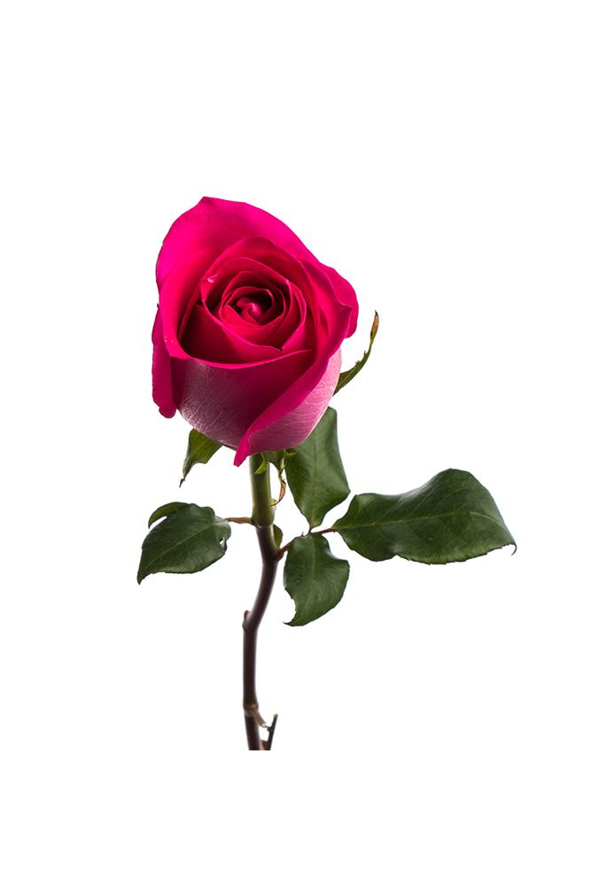 Rose Hot Pink Topaz