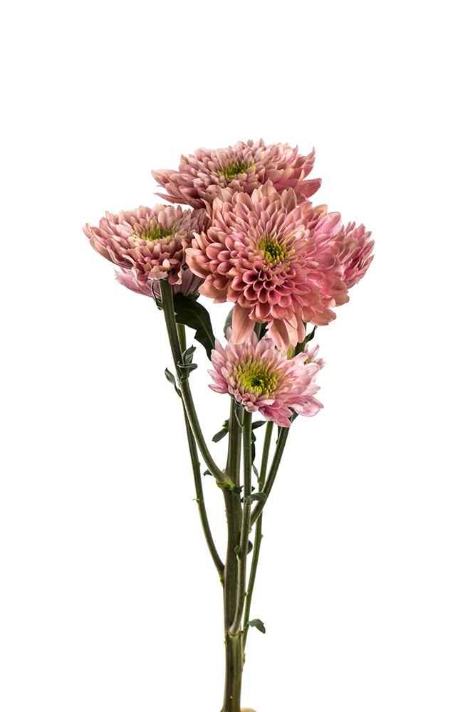 Pom Cushion Romancera Pink