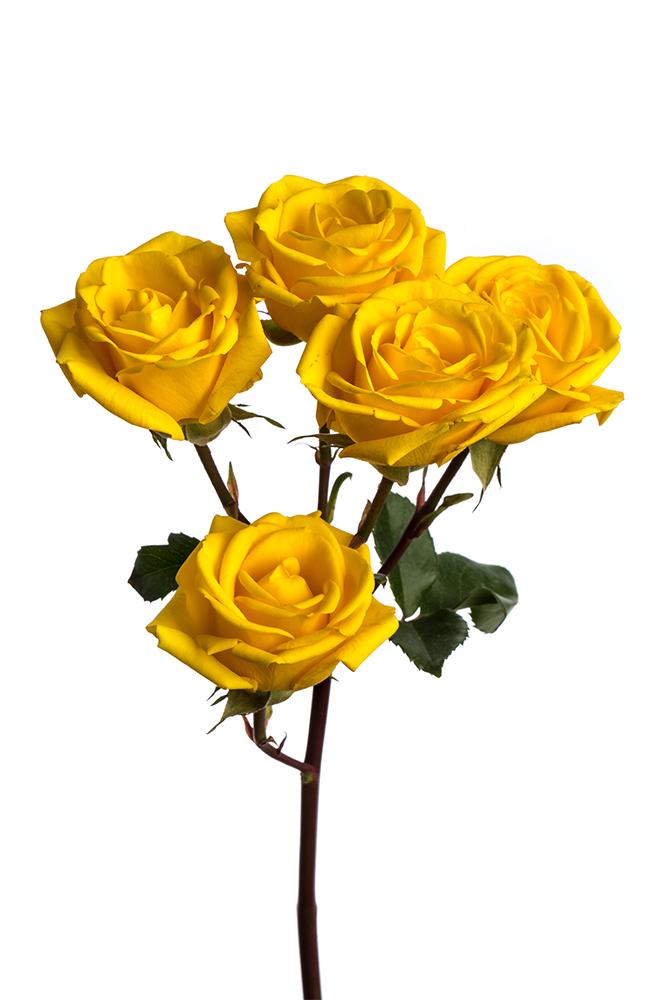 Spray Rose Yellow Summer Set